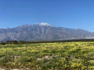 Western Rally desert in bloom